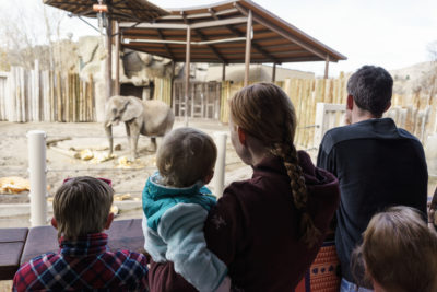 Elephant and Pumpkin 2017-12-05